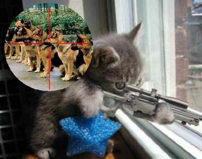 Katzenanarchismus
